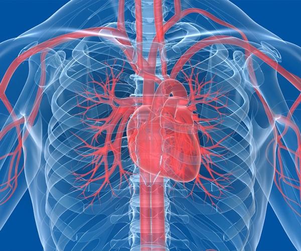 Гипертрофия кровеносных сосудов